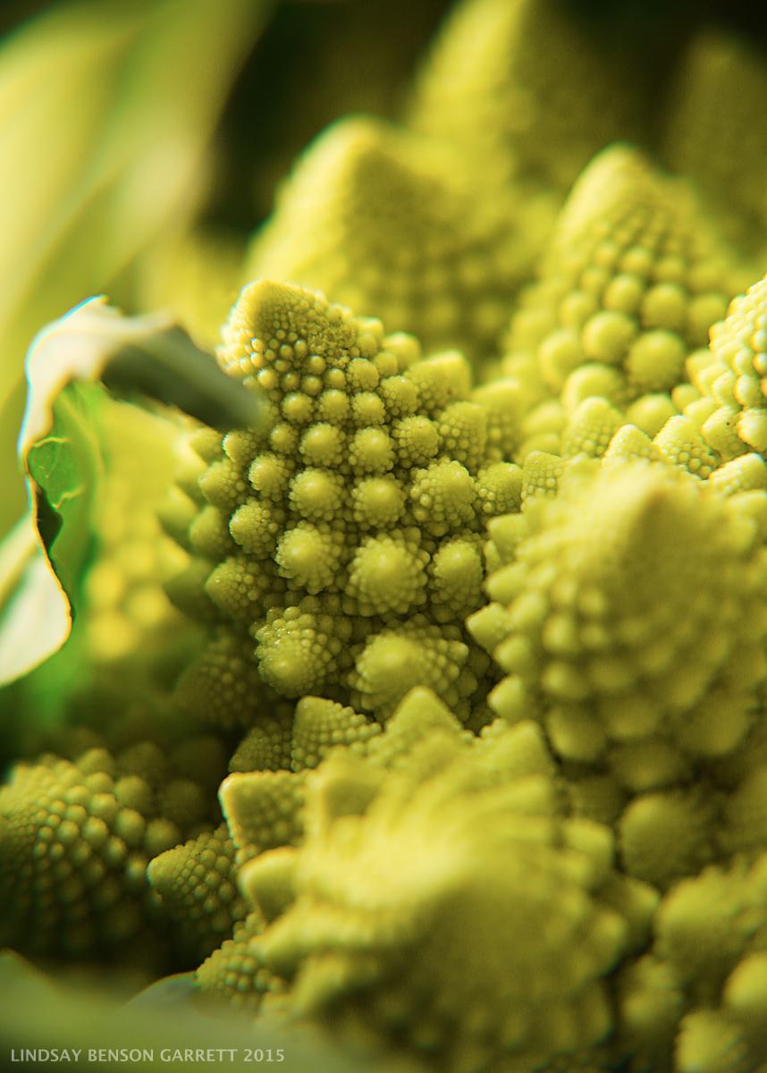 Broccoli - by Lindsay Benson Garrett